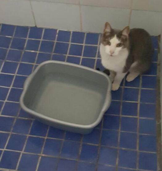 cat-shower-crop
