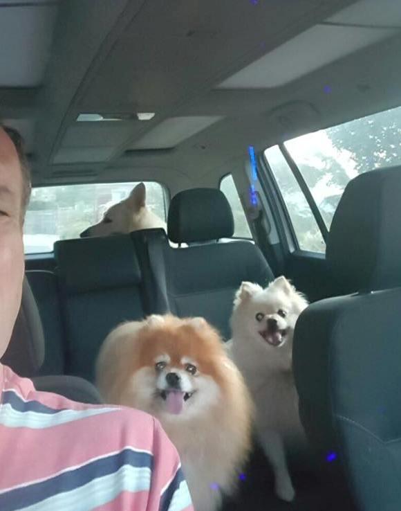 dog car karaoke.jpg